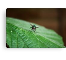 What You Looking At Fly? Canvas Print