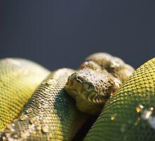 Snake by DannyJFord
