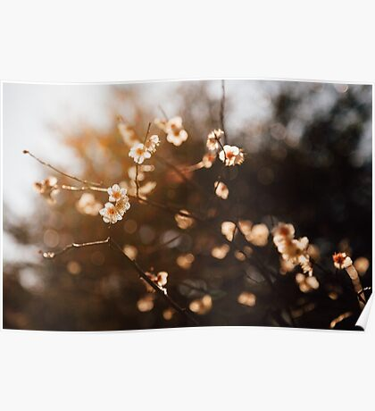 Japanese Plum Blossoms Poster