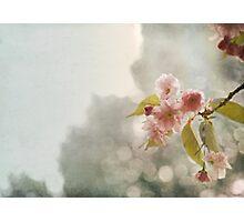 Twilight in the Garden Photographic Print