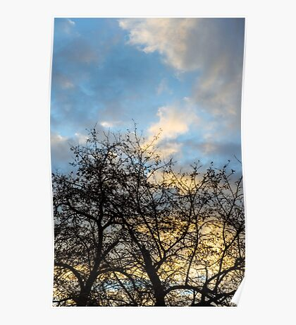 Winter trees at sunset Poster
