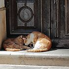 Catsnap by Paul Pasco