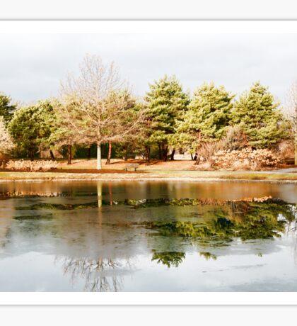 Mcbride Arboretum - Winter Reflection Sticker