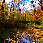 Fall foliage by Daniel Sorine