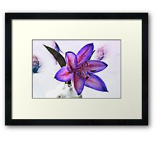 Many Shades Of Lily. Framed Print