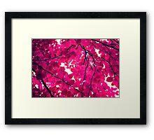 Magenta Framed Print