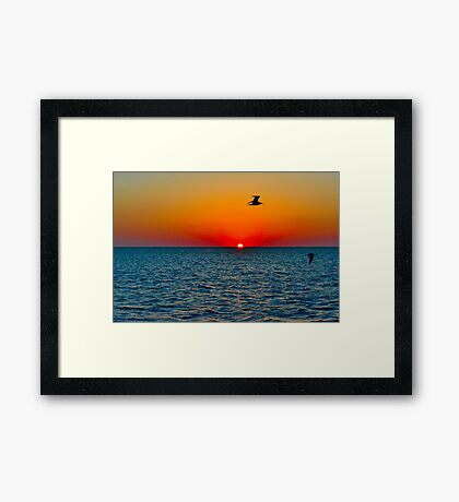 Seagull Sunset Framed Print