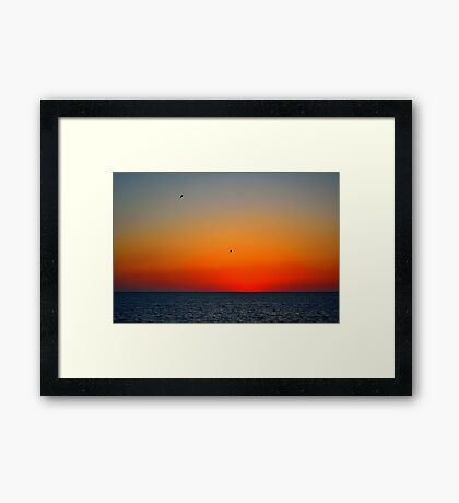 Seagull After Glow Framed Print