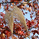 Pampas Grass in Fall by 319media