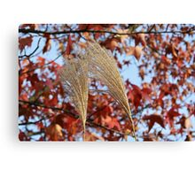 Pampas Grass in Fall Canvas Print