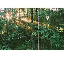 Forest Sunbeams at Golden Hour Photographic Print