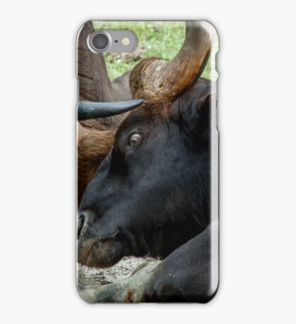 Locking Horns  iPhone Case/Skin