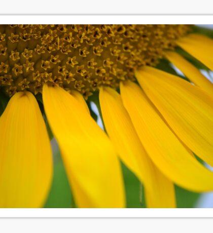 Radiate Your Own Sunshine Sticker