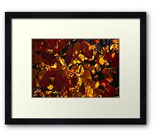 Bold and Colourful - Take 3 Framed Print