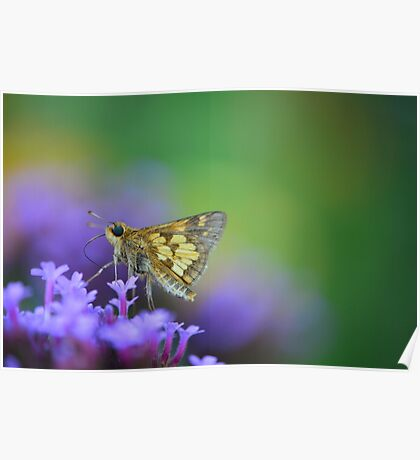 Flitting Around from Flower to Flower Poster