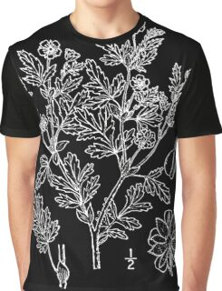 Britton And Brown Illustrated flora of the northern states and Canada 1174 Potentilla paradoxa drawing 02 Graphic T-Shirt
