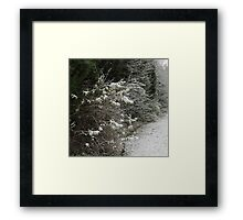 Bushy White... products Framed Print