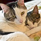 Mischa Takes Care of Sophia (I MISS YOU MISCHA♥) by Heather Friedman
