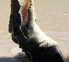 Crocodile by Camilla