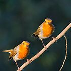 Mr & Mrs Robin Red Breast by M.S. Photography/Art