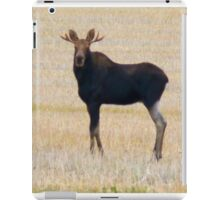 "Nice Young Bull Moose...""I'm a Handsome Dude"" iPad Case/Skin"