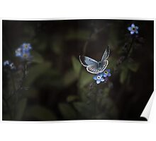 MOONLIT BUTTERFLY Poster