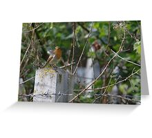 Robin and Barbed Wire Greeting Card