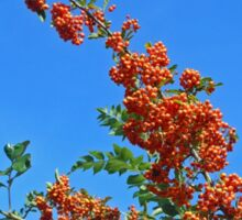 Reach for the sky! Profusion of Berries Sticker