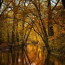 River of Gold by Victoria Jostes