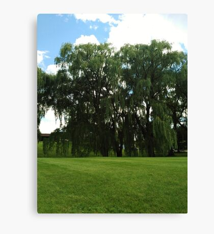 Weeping Willow Trees Photo Canvas Print