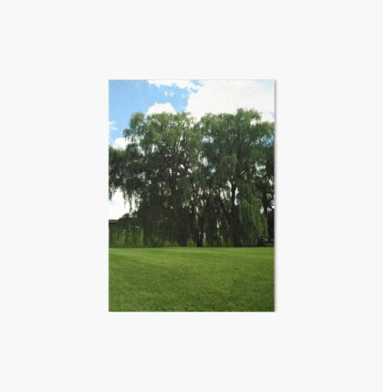Weeping Willow Trees Photo Art Board