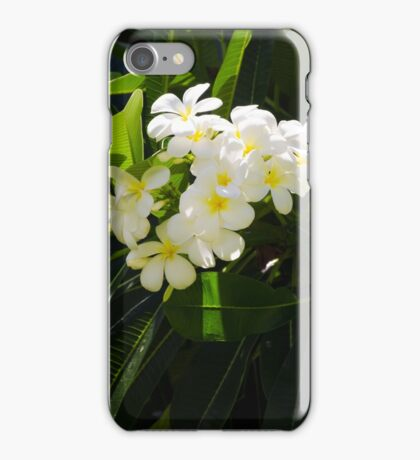 Frangipani (plumeria) flower iPhone Case/Skin