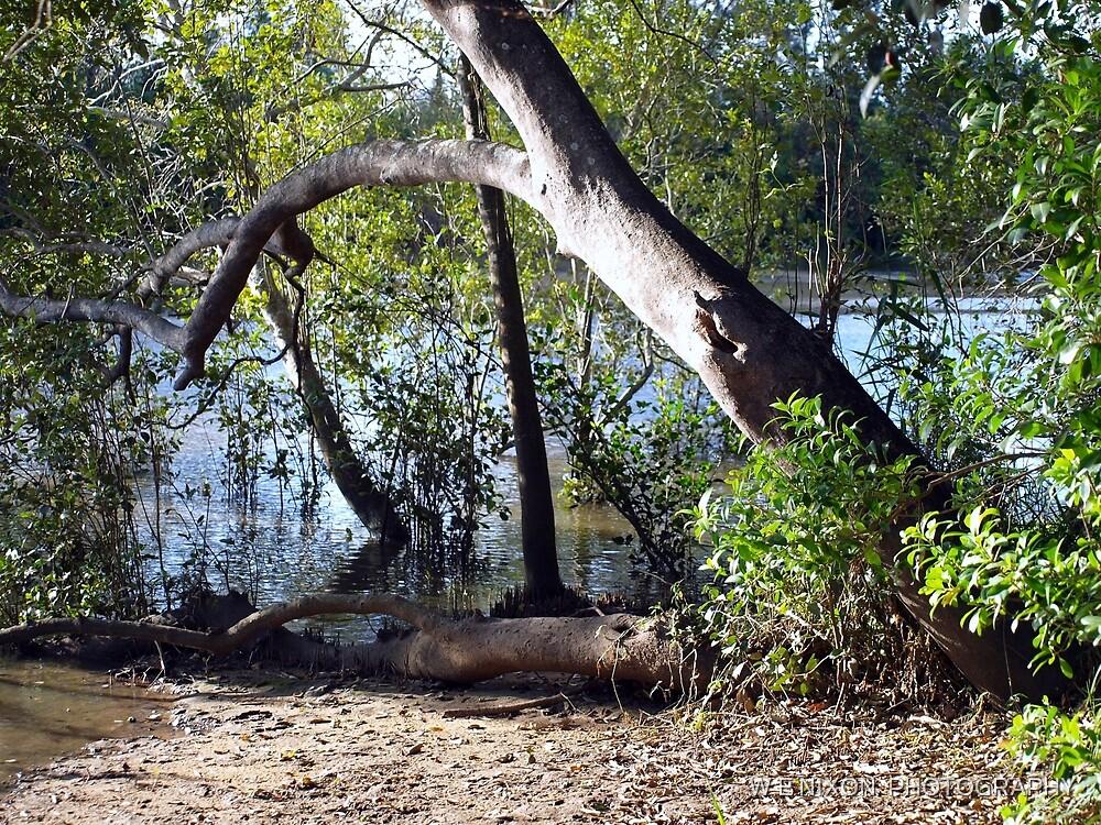 Mangroves by Wayne  Nixon  (W E NIXON PHOTOGRAPHY)