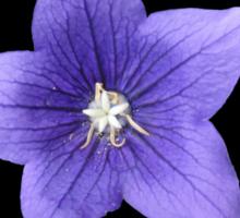 Pretty Little Purple Balloon Flower Sticker