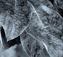 Foliage - B&W by ctheworld
