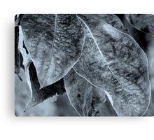 Foliage - B&W Canvas Print
