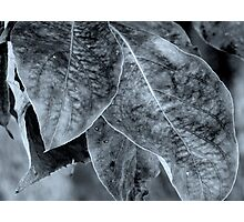 Foliage - B&W Photographic Print