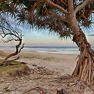 Two Trees by Cheryl Styles