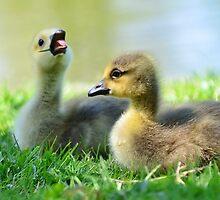 Big Yawn by Kathleen Struckle