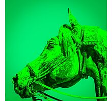 The Dark Green Horse Photographic Print