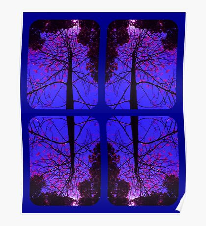 The Flame Tree Blossoms Poster
