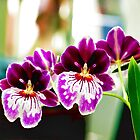 Happiness is an Orchid! by Patricia L. Walker