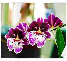 Happiness is an Orchid! Poster