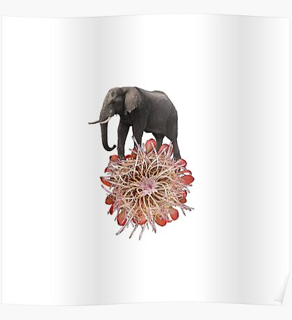 The Elephant Flower Poster