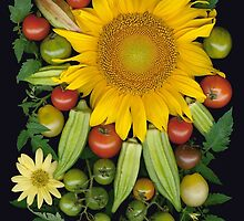 Sunflower, Okra Mosaic by Ellen Hoverkamp