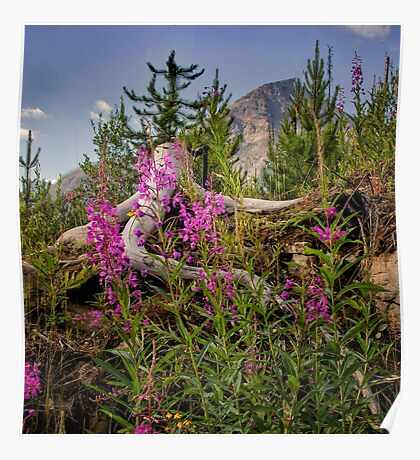 Fireweed on the Mountain Poster
