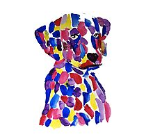 Colorful puppy Photographic Print