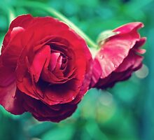 Red, Red Ranunculus by Patricia L. Walker