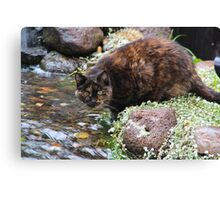 Miss Phoebe, Her Story Canvas Print