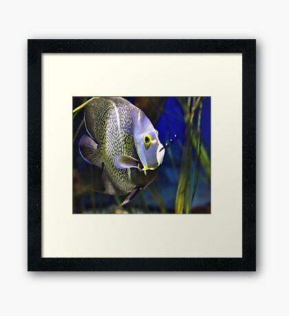 Fish Bubbles Framed Print